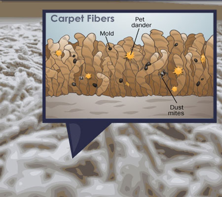 Regular Carpet and Upholstery Cleaning Keeps Your Home Healthy